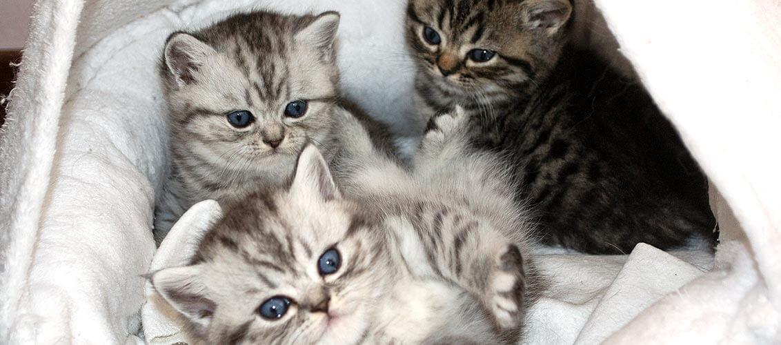 R Wurf Kitten