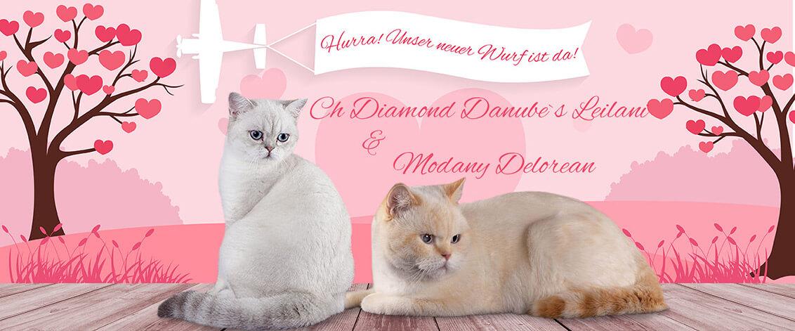 X Wurf Eltern Diamond Danubes